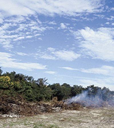 Coronavírus não muda realidade da Amazônia e desmatamento sobe mais de 200%