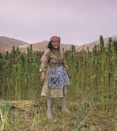Coronavírus: Líbano autoriza cultivo de maconha para recuperar economia