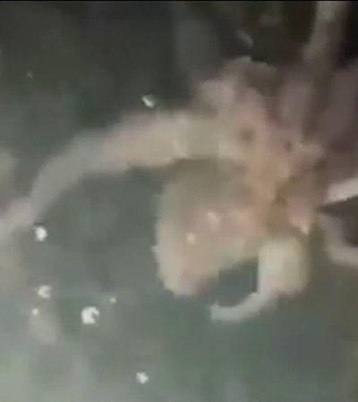 Polvo é visto em canal de Veneza limpo com isolamento social