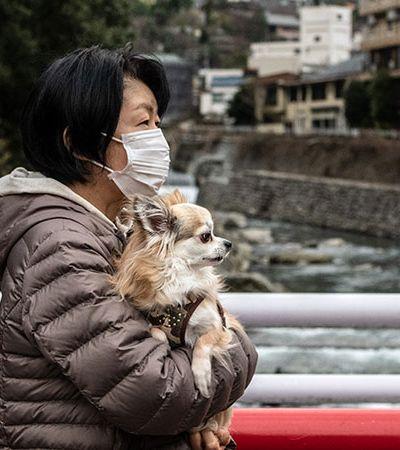 China anuncia que não vai permitir o consumo de cães e gatos como alimento