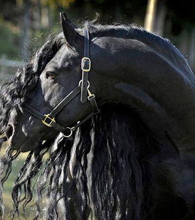 As pessoas estão encantadas com Frederik, o cavalo mais lindo do mundo