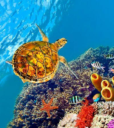 Cientistas citam resiliência e dizem que oceanos podem ser 'resetados' em 30 anos