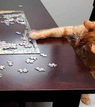 Gatos que não pensaram duas vezes e destruíram quebra-cabeças com estilo