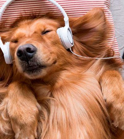 Quarentena com o pet? Spotify cria playlist para ouvir junto dos bichinhos