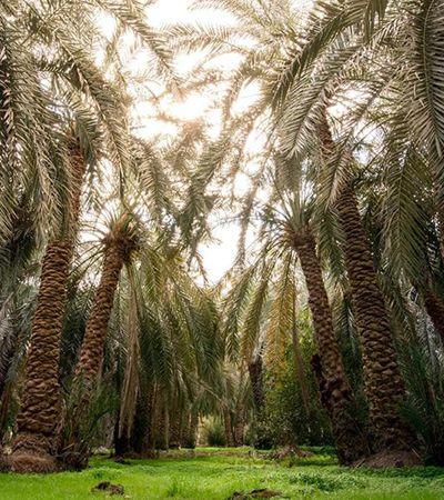 Palmeiras e calor? Os mistérios do Deserto do Saara egípcio