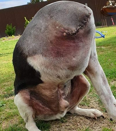 As pessoas (não por acaso) estão tendo dificuldades para entender a foto deste cão
