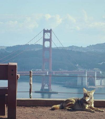 Animais não param de reocupar cidades pelo mundo durante quarentena