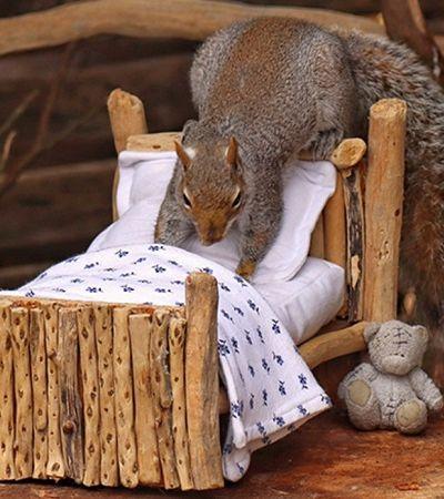 Os registros deste esquilo explorando a casa miniatura que ganhou de um amigo humano