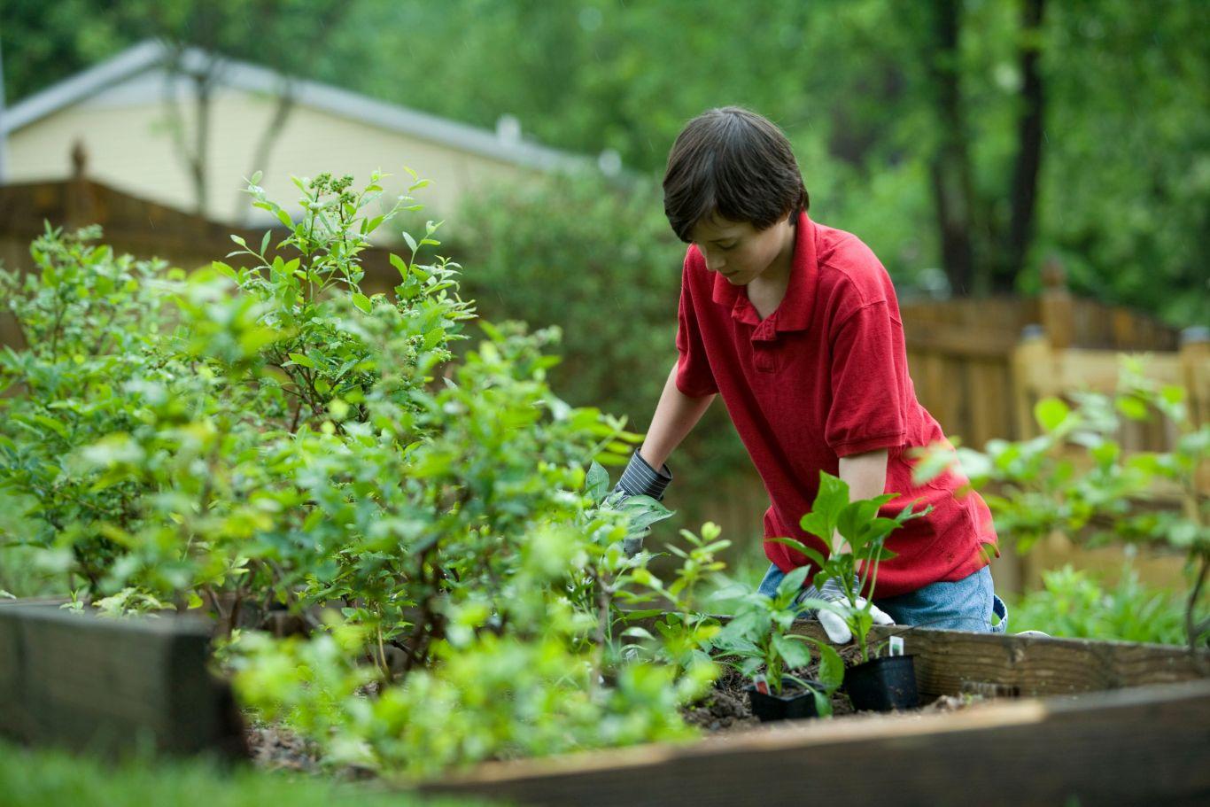 lista produtores orgânicos greenpeace 3