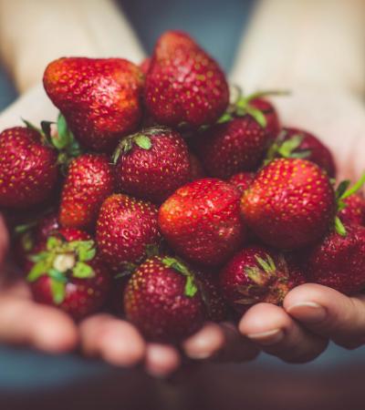 Lista de contatos de agricultores orgânicos e agroecológicos para compras conscientes