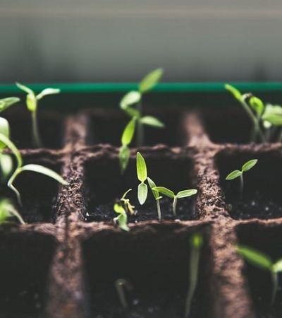 Aprenda a fazer mudas a partir das sementes dos vegetais que você consome