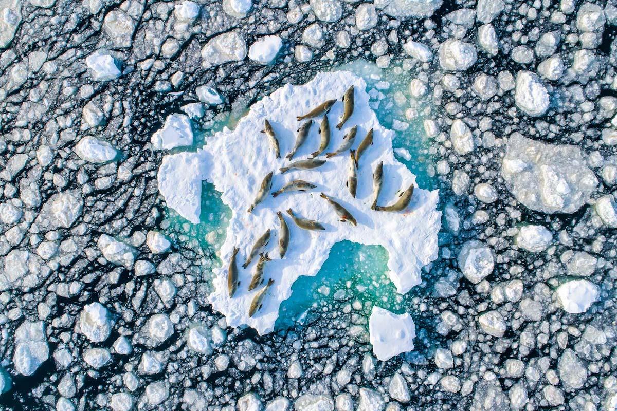 peixes descansando gelo