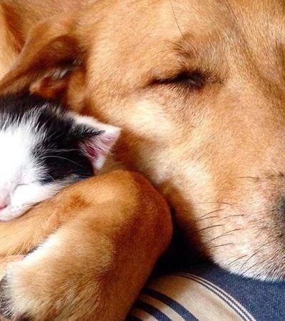 A história de afeto do cachorro que cuida dos gatinhos resgatados em abrigo