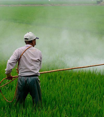 Pandemia não impede aprovação de 118 novos agrotóxicos em 2 meses pelo Governo Federal