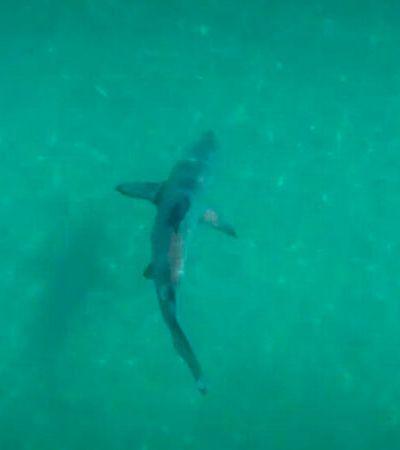 Vídeo mostra tubarões nadando perto da costa do Rio; especialistas associam ao isolamento social