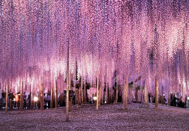 árvore mais bonita mundo 1