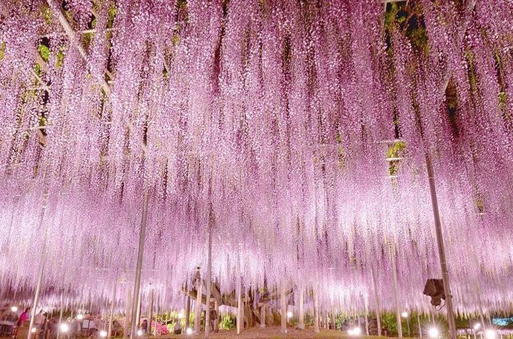 árvore mais bonita mundo 2
