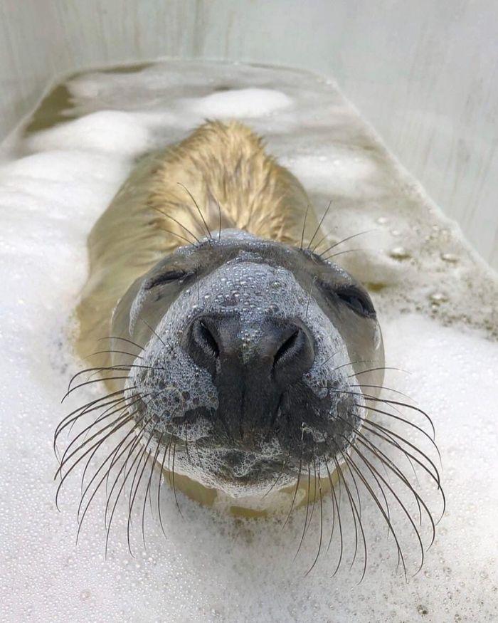 bebes foca em perigo 2