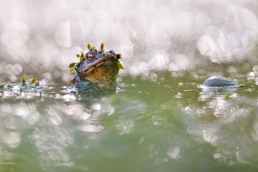 concurso de fotografia natureza 3