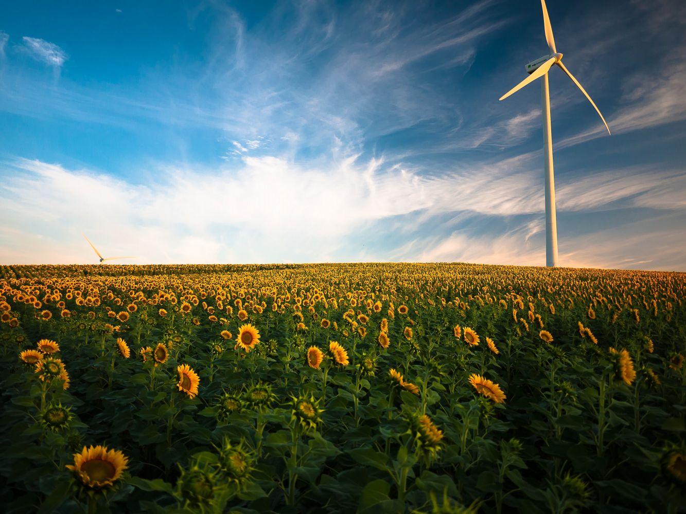 consciência ambiental americanos 1