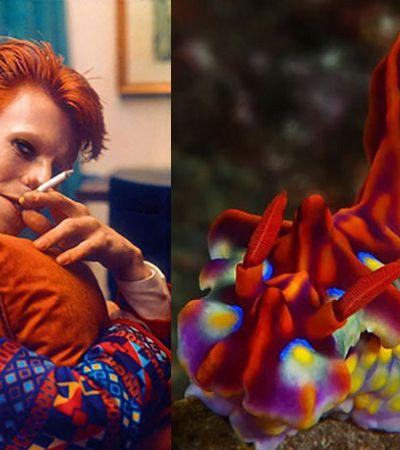 O 'match' genial entre os looks de David Bowie e seres do mar