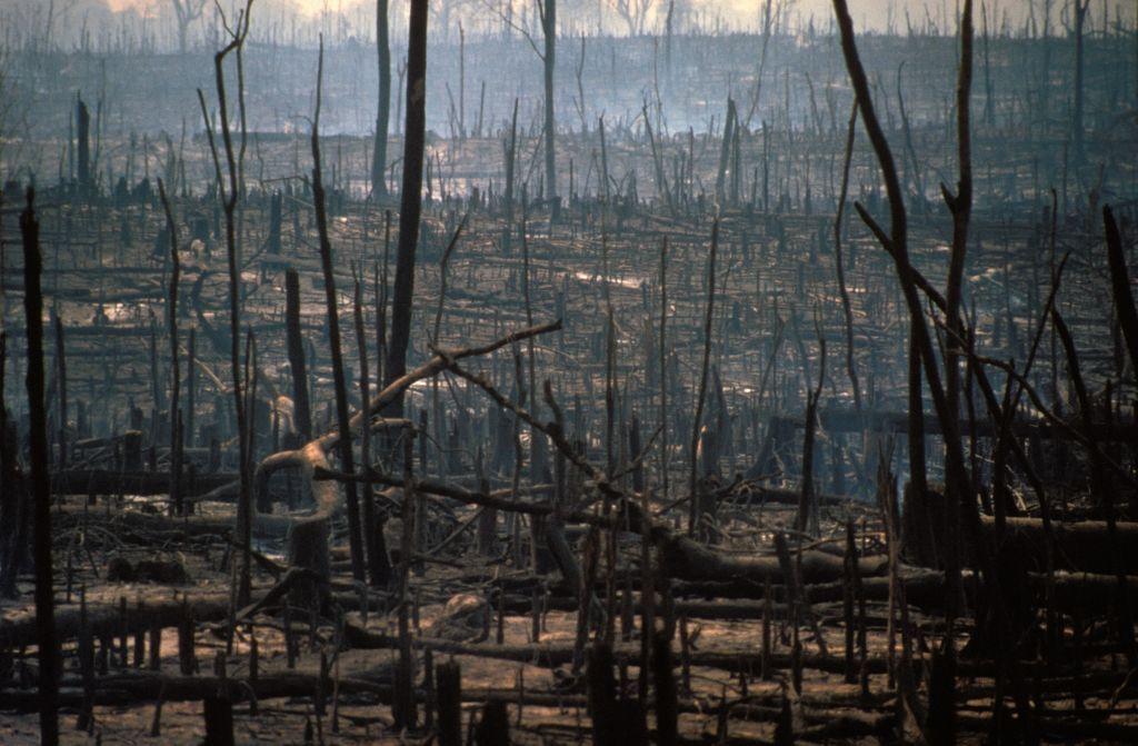 desmatamento amazônia pandemia 2