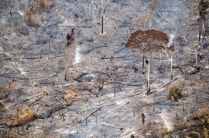 desmatamento amazônia pandemia 4