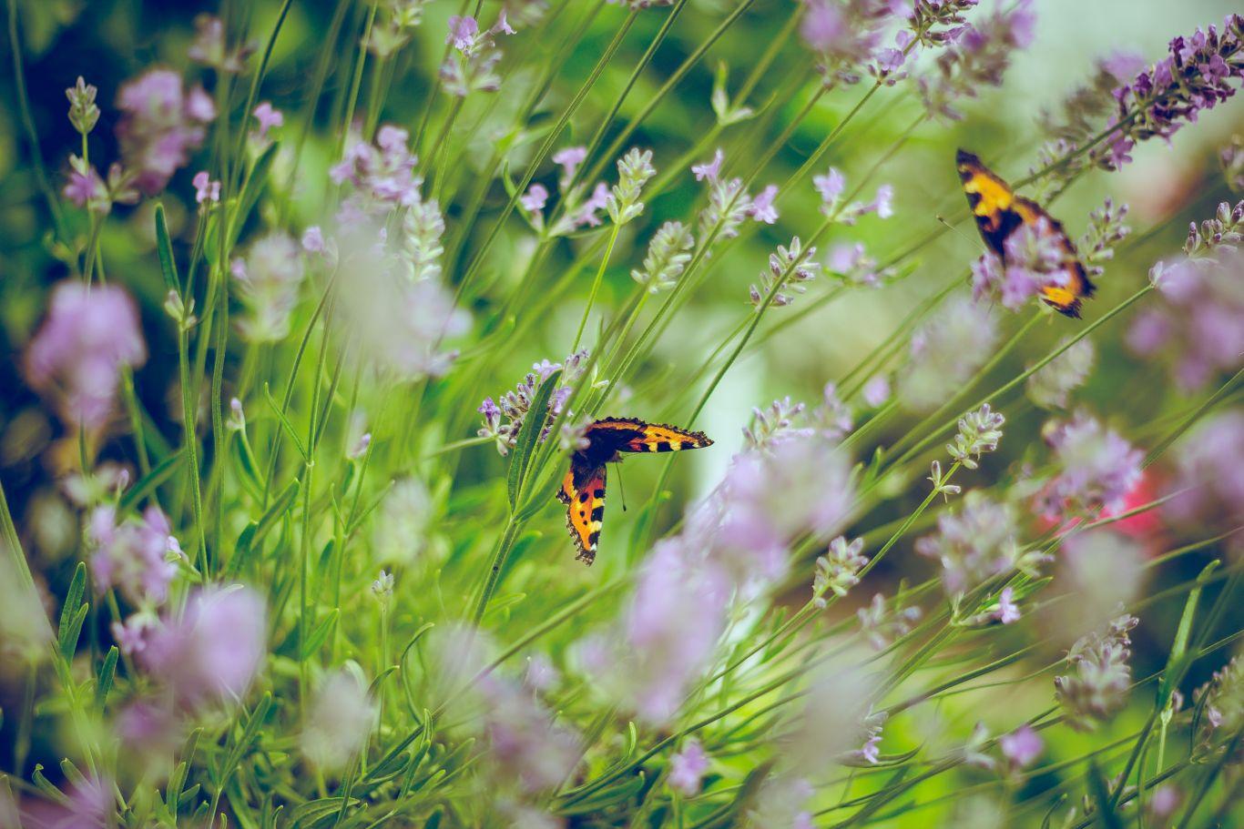 flores plantações 3