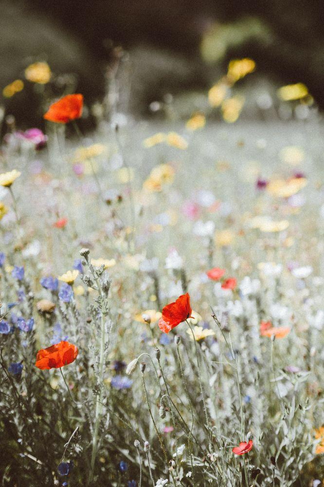 flores plantações 4