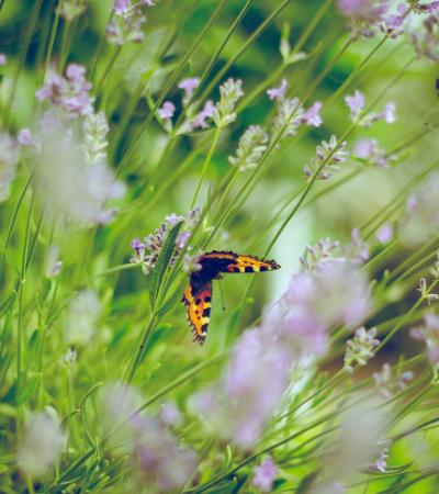 Flores no lugar de agrotóxicos podem ser alternativa sustentável para plantações