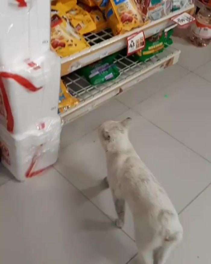 gatinho desabrigado pede comida 2