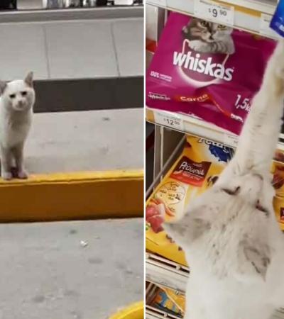 Gato abandonado leva desconhecida a mercado, pede comida e é adotado