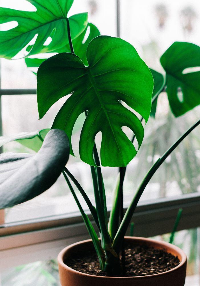plantas que purificam o ar 3