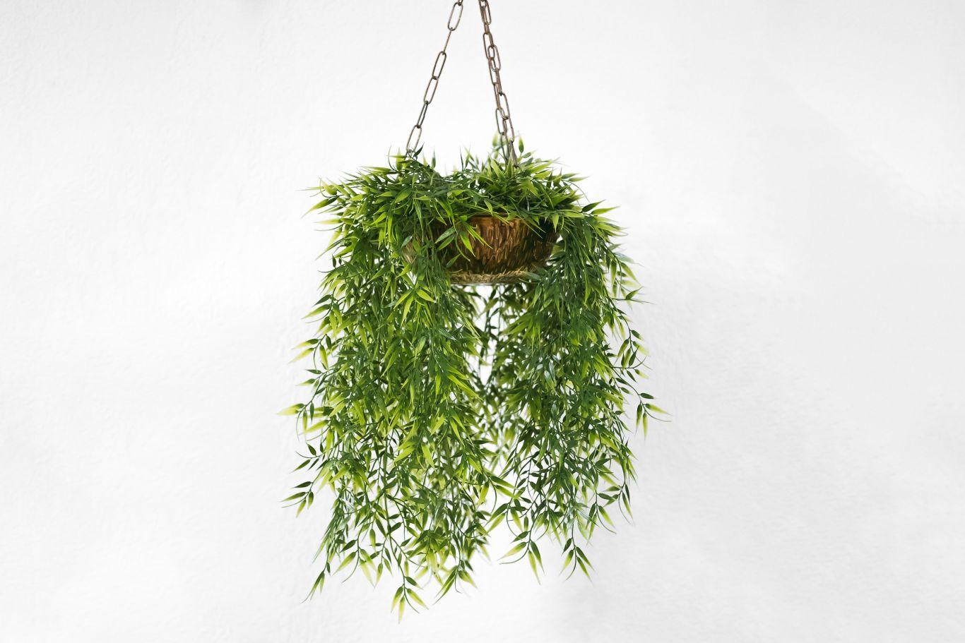 plantas que purificam o ar 4
