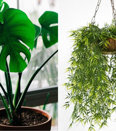 E-book gratuito te ajuda a escolher e cultivar plantas que purificam o ar