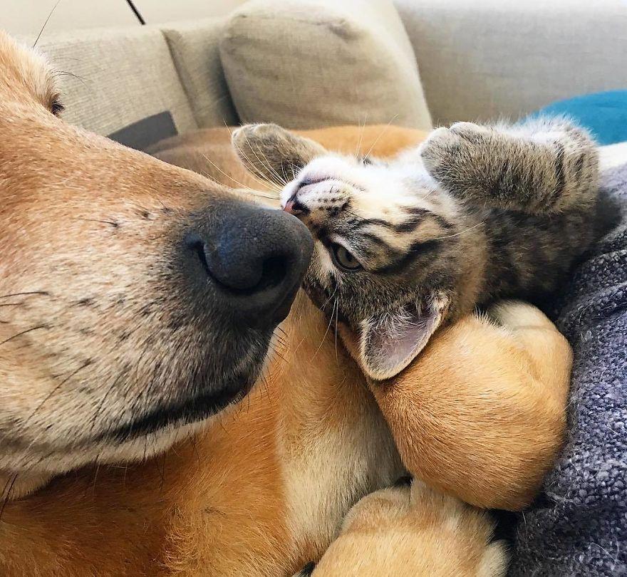 raylan cachorro babá 3