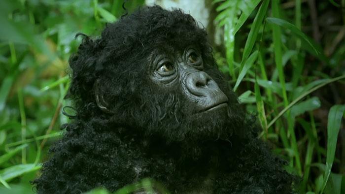 robô gorila infiltrado 3