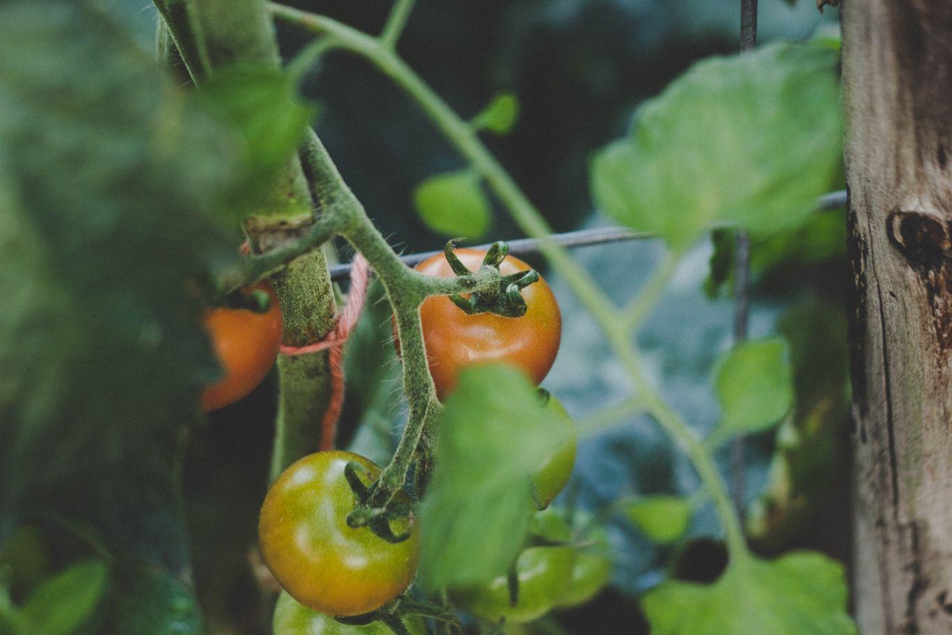 sistemas agroflorestais 1