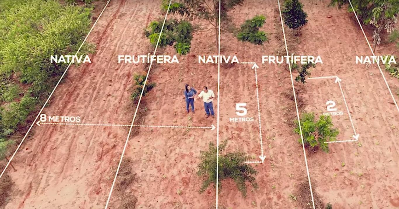 sistemas agroflorestais 4