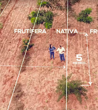 Aprenda sobre sistemas agroflorestais em aulas gratuitas e online