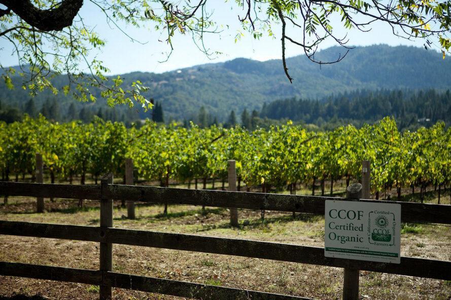 vinícola ecológica napa valley 3