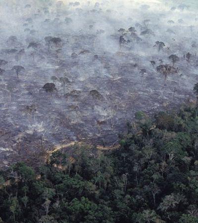 Desmatamento no Brasil em 2019 foi 99% ilegal e país é o que mais destrói florestas no mundo