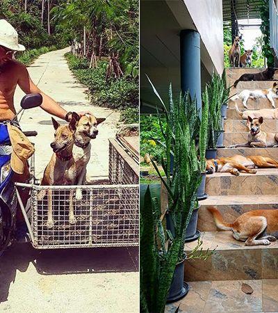 Eles se mudaram para ilha sem veterinário e adotaram cachorros com problemas de saúde