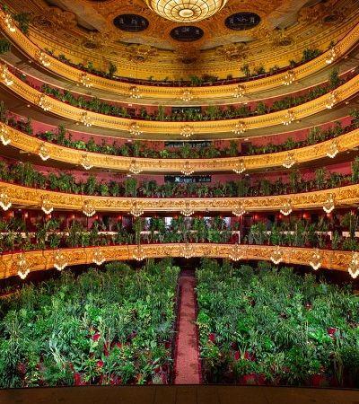Concerto para 2.200 plantas provoca reflexão sobre nossa relação com a natureza