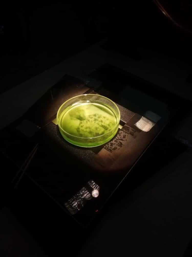 fotos impressas em algas 1