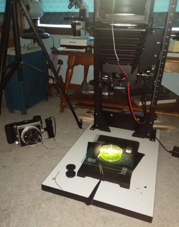 fotos impressas em algas 2