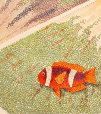 Ilustrações da Grande Barreira de Corais na primeira enciclopédia do mundo