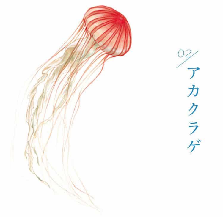 guarda-chuva água viva 7