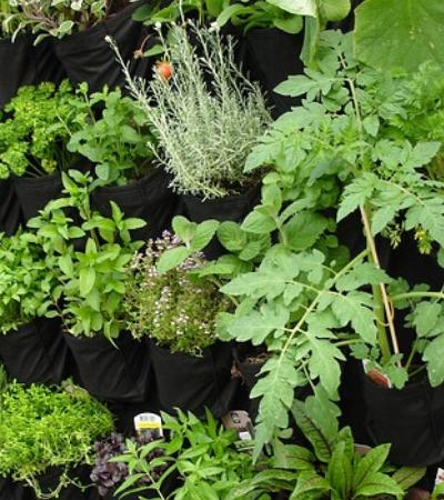 Curso gratuito ensina a fazer sua horta orgânica em casa