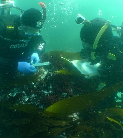 Mergulhadores vasculham naufrágios de escravos para descobrir antepassados